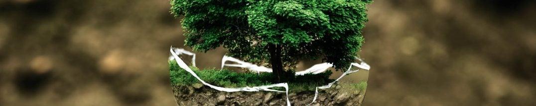 Baum wächst aus Kugel, Stilbild, Foto: pxhere/CC