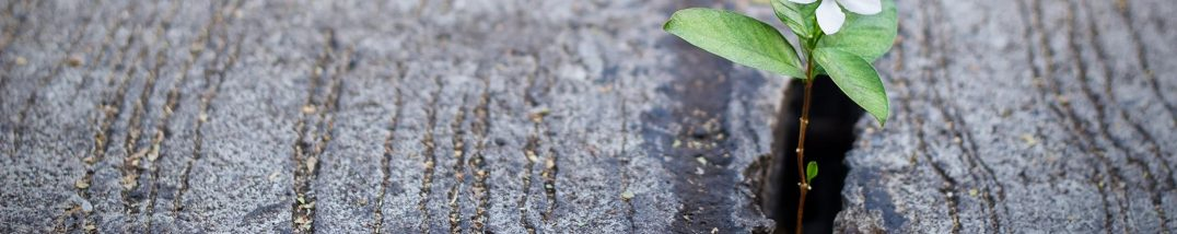 Wachsende Pflanze, Foto: iStock