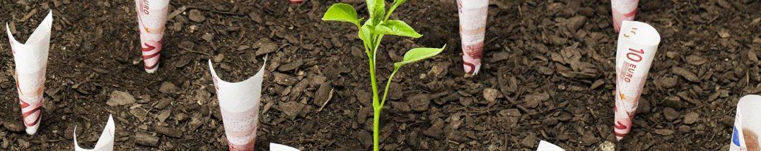 Crowdfinancing: Pflanze und Geld (Foto: iStock)
